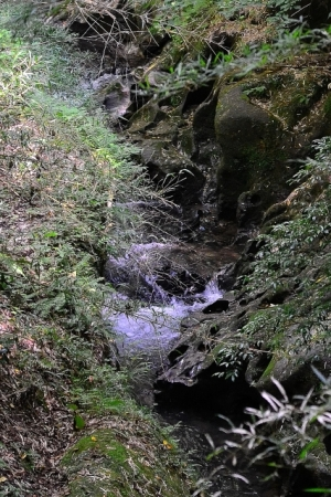 伏見川の渓流