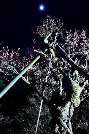 夜の梅~兼六園ライトアップ