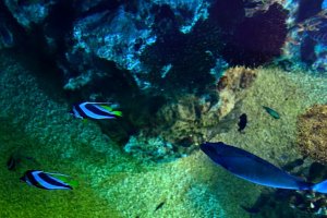 南の海の魚たち