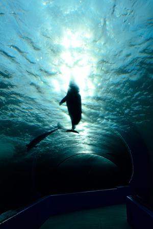 イルカたちの楽園 のとじま水族館