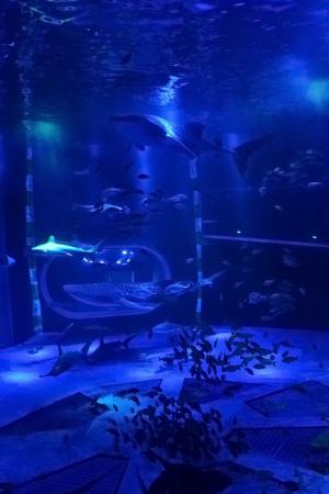 ジンベエザメ 青の世界