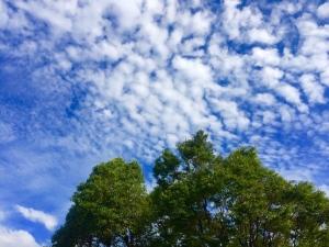 青空 うろこ雲