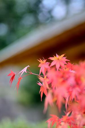 小さな秋…金沢にて