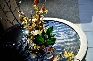 鉢の中の早春