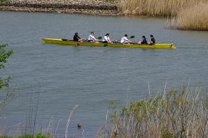 ボート部の練習