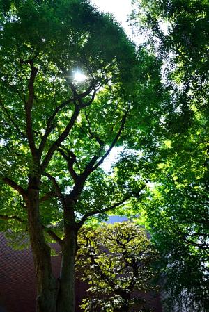 上野公園の杜