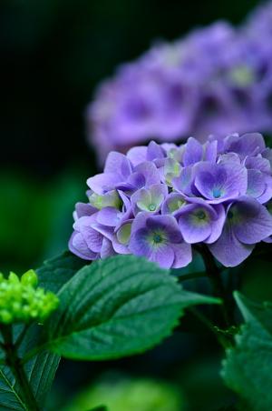 紫もキレイ