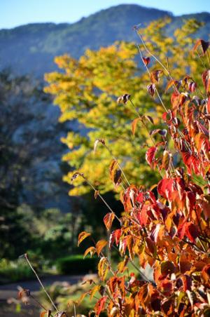 白山麓 秋の風情