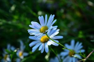 これも名残の花