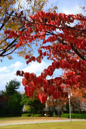 小さな公園の秋