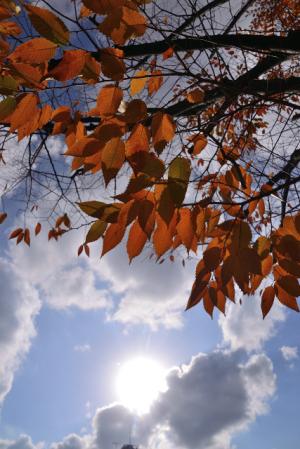 晩秋の陽射し