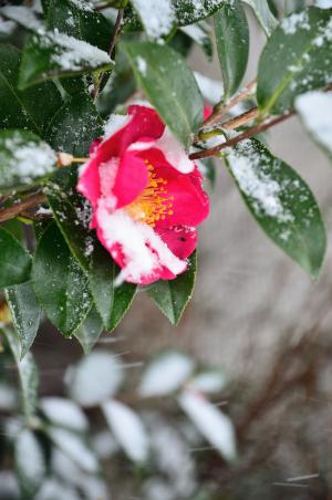 吹雪に咲く