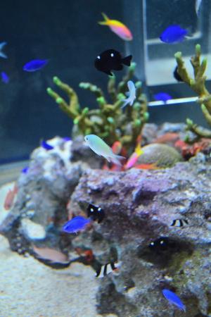 鮮やかな熱帯魚たち